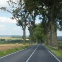 Humm, an avenue of trees, perhaps a little French?
