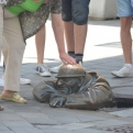 This fellow is particularly popular with the tourists